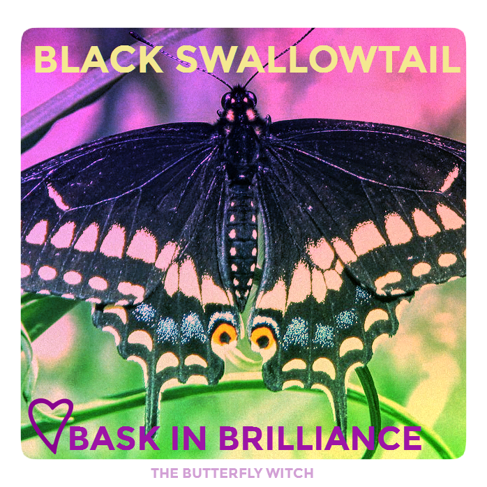 The Butterfly Witch - Black Swallowtail Affirmation.png
